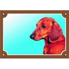 Barevná cedulka Pozor pes, Jezevčík hladkosrstý